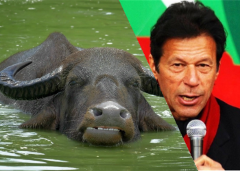 Imran khan Buffalo