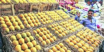 Mango, exports