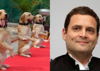 Rahul Gandhi, Indian Army, dogs