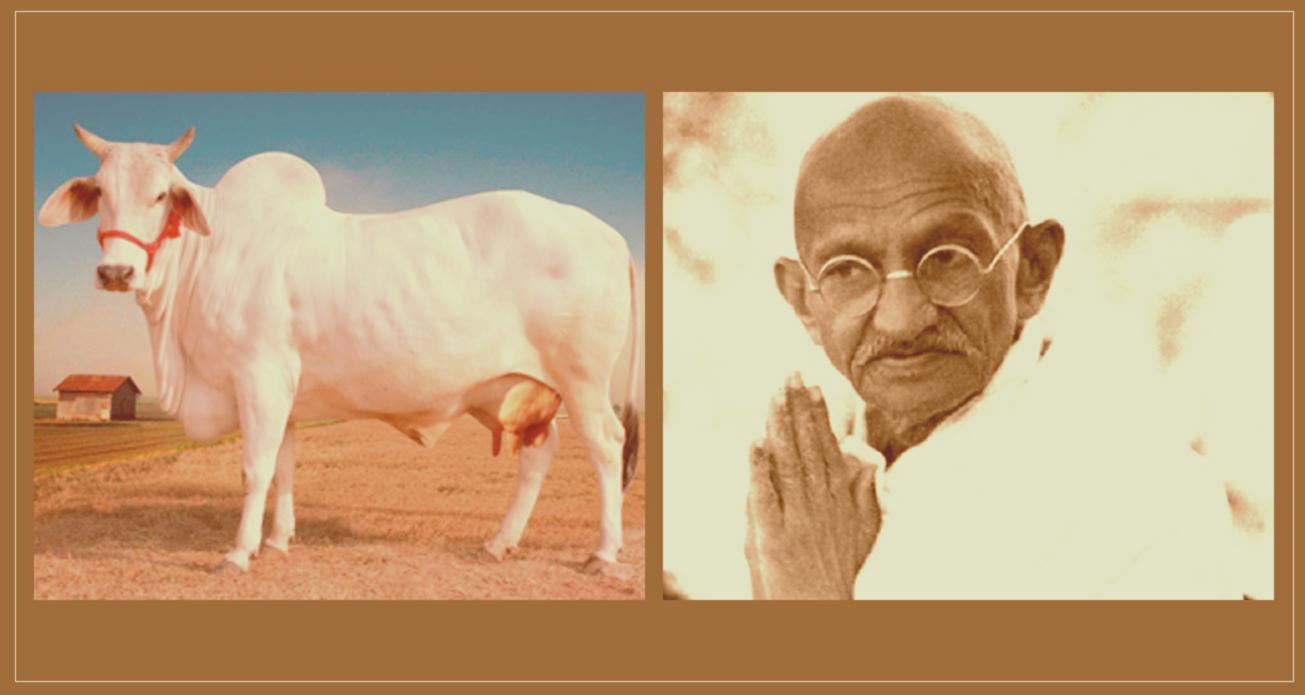 गांधीजी गाय