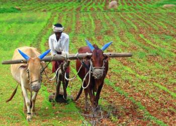 मोदी सरकार किसान