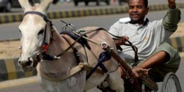 गधे गरीबी पाकिस्तान